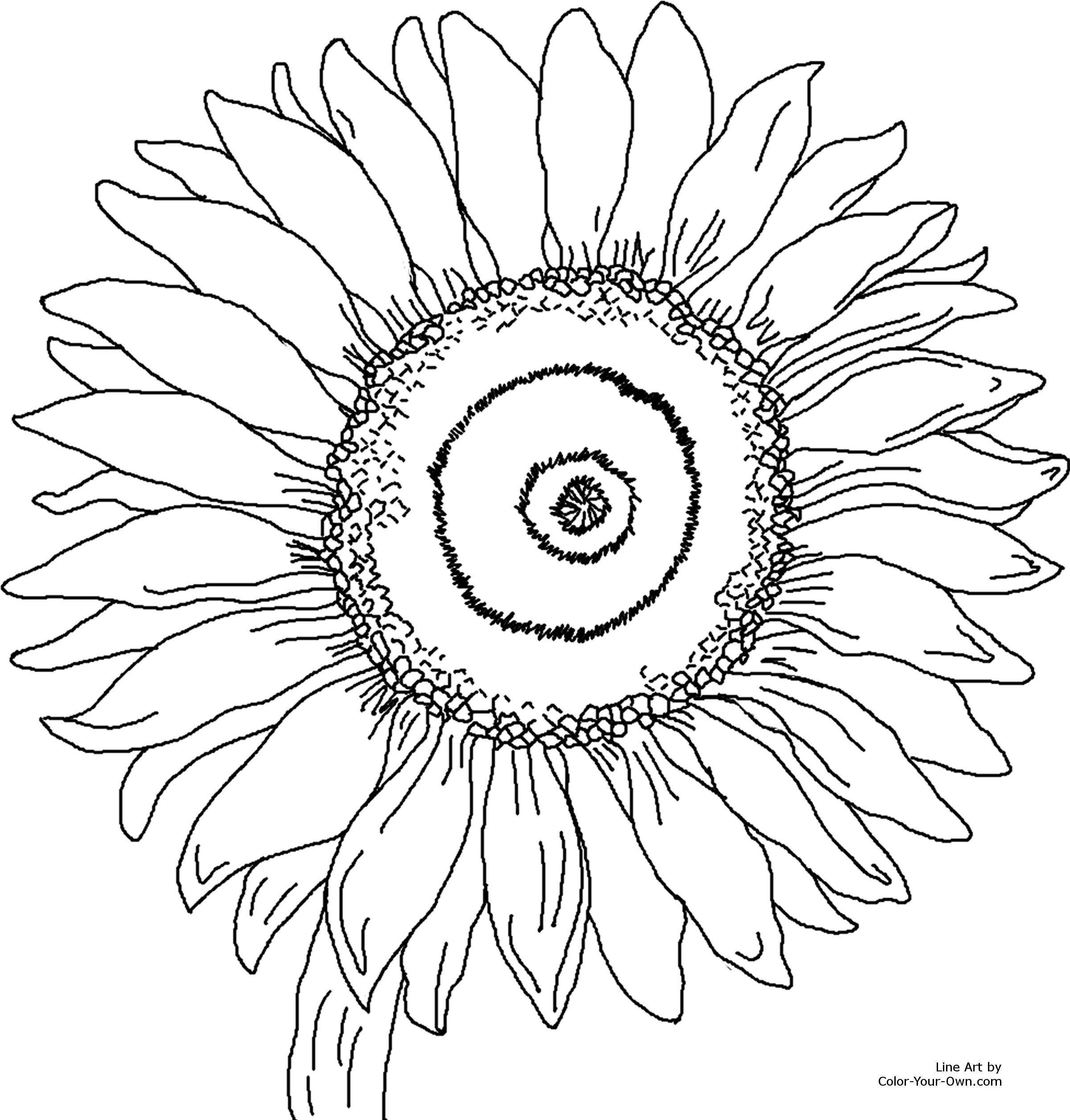 free adult coloring pages to print Bing images