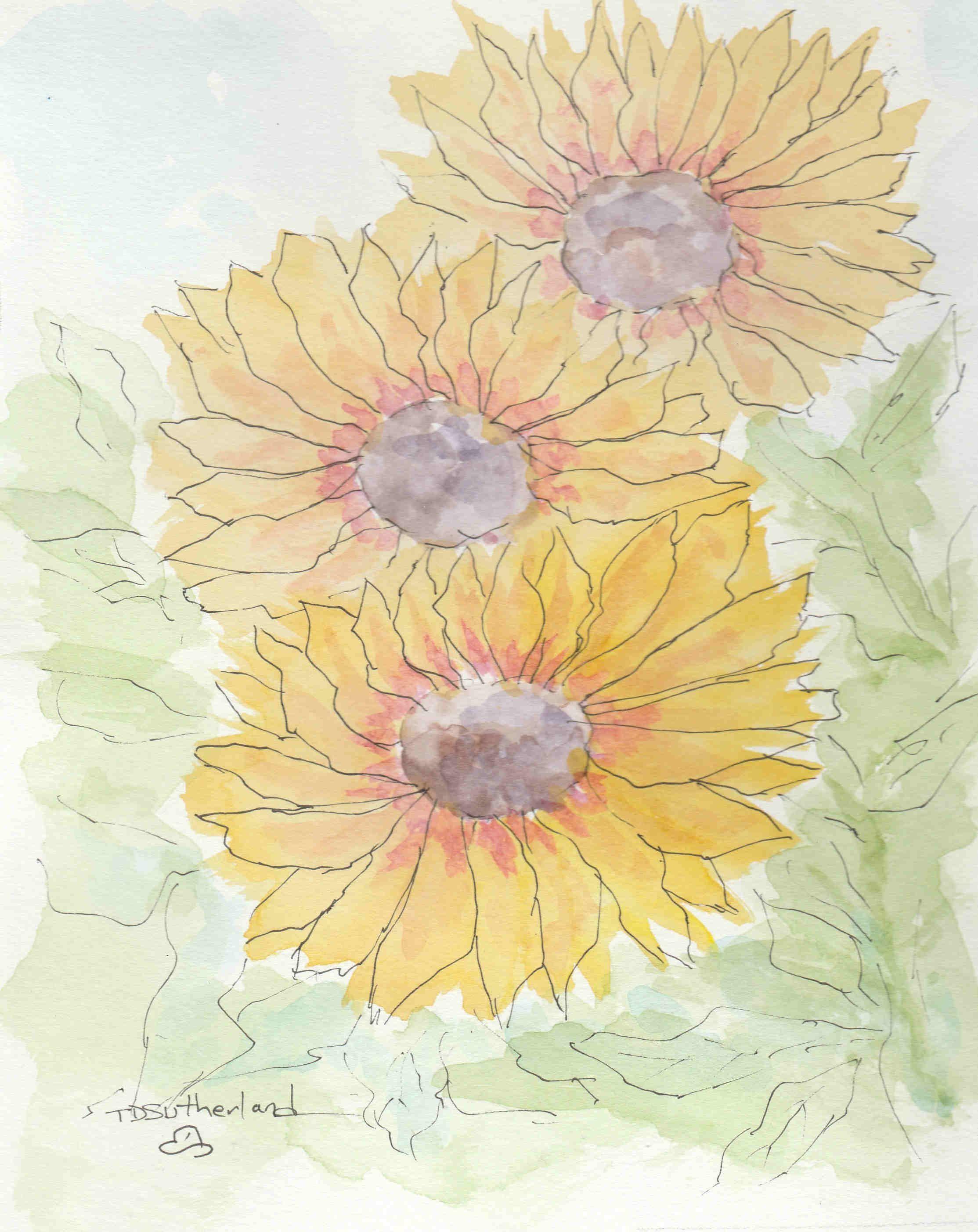 Line and Wash Sunflower I