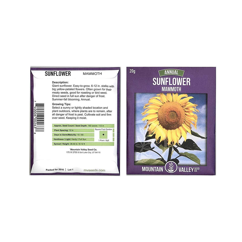 Amazon Sunflower Garden Seeds Mammoth Grey Stripe 1 Lb Annual Sun Flower Gardening Seeds Gray Garden & Outdoor