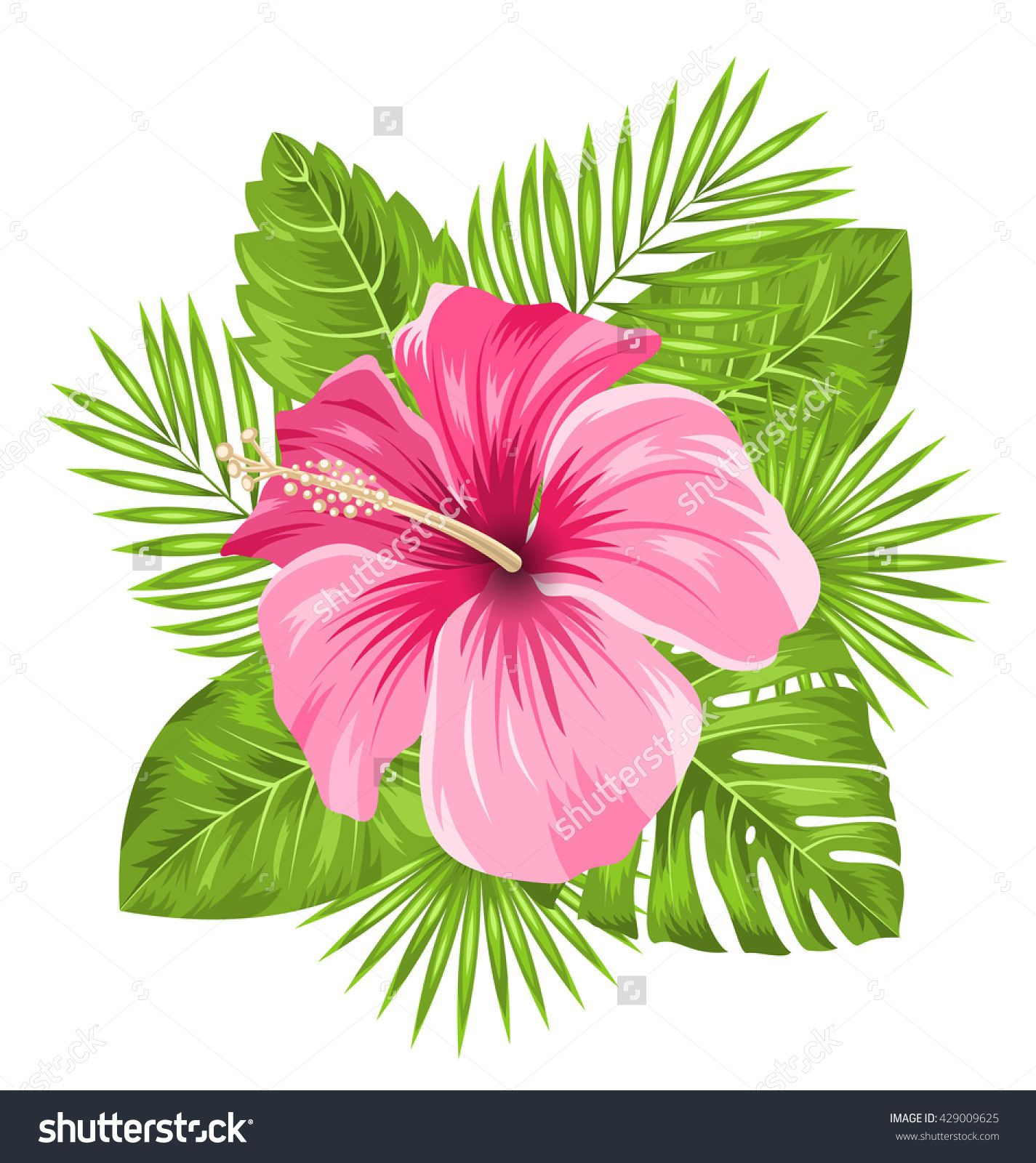 Illustration Beautiful Pink Hibiscus Flowers Blossom and Tropical Leaves Isolated on White Background raster