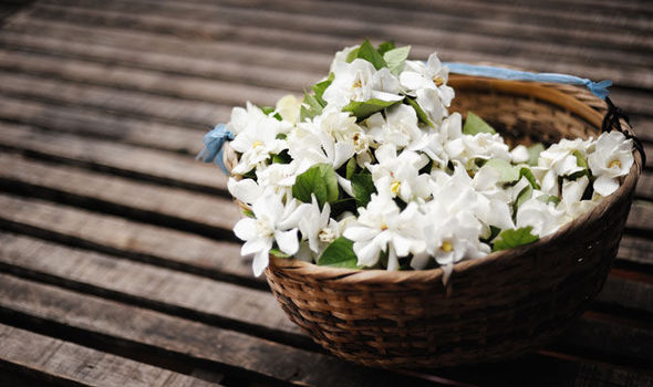 Types of jasmine flower