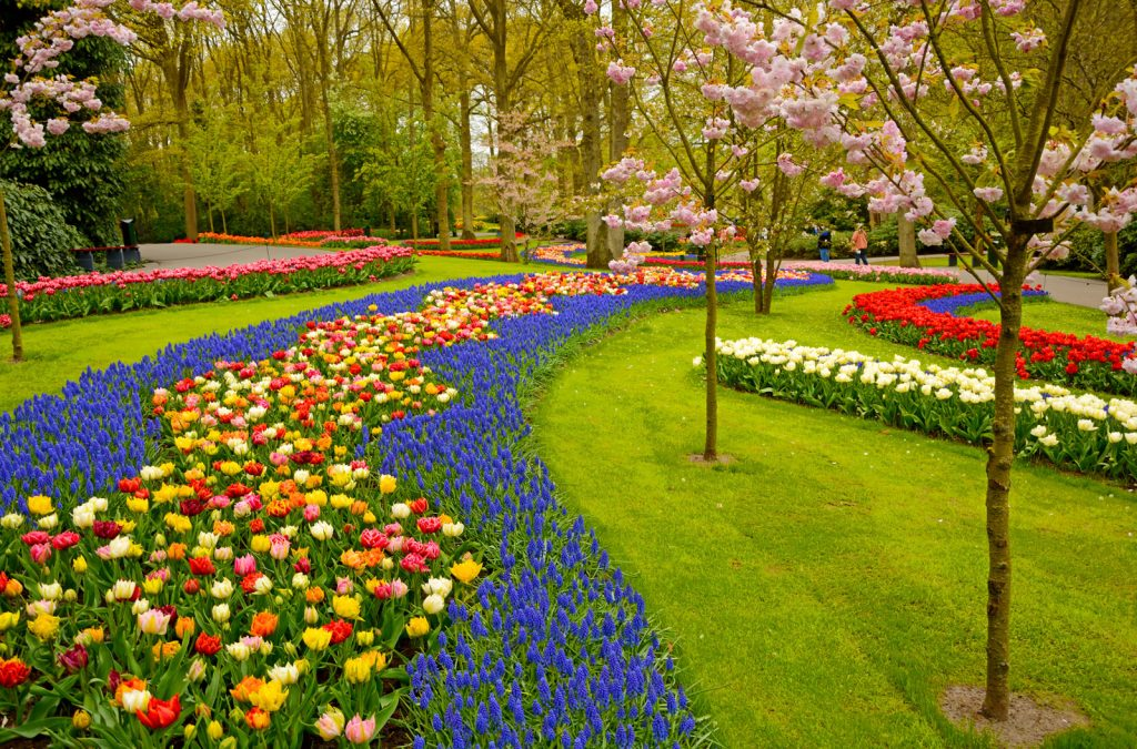 Creating a Flower Bed, a Combination of Nature and Science (Encyclopedia Britannica)