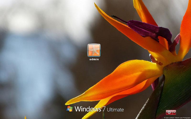 Flower Images Wallpaper in Windows 7