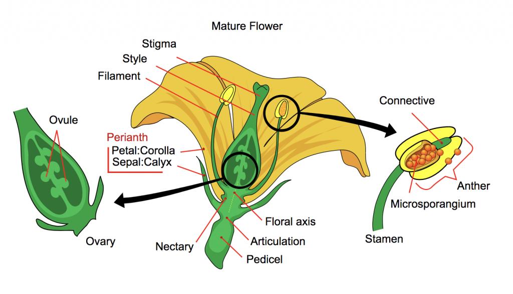 Flower function
