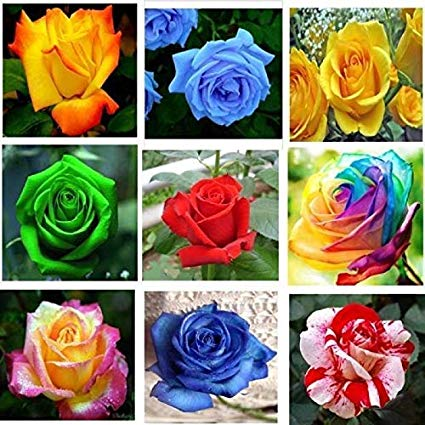 Greenly Organic Imported 9 Types Rose (amazon.in)