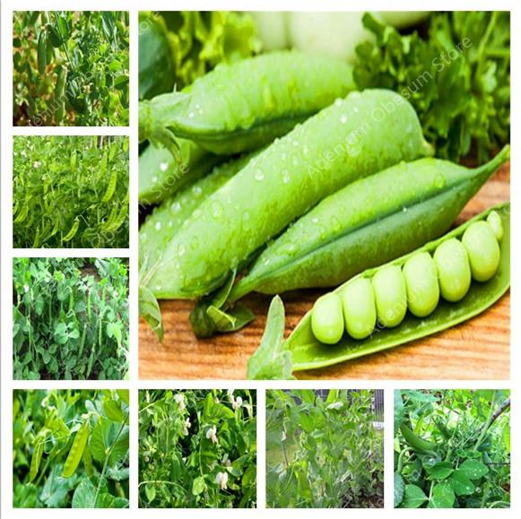 Peas and Beans in a Home Garden (AliExpress)