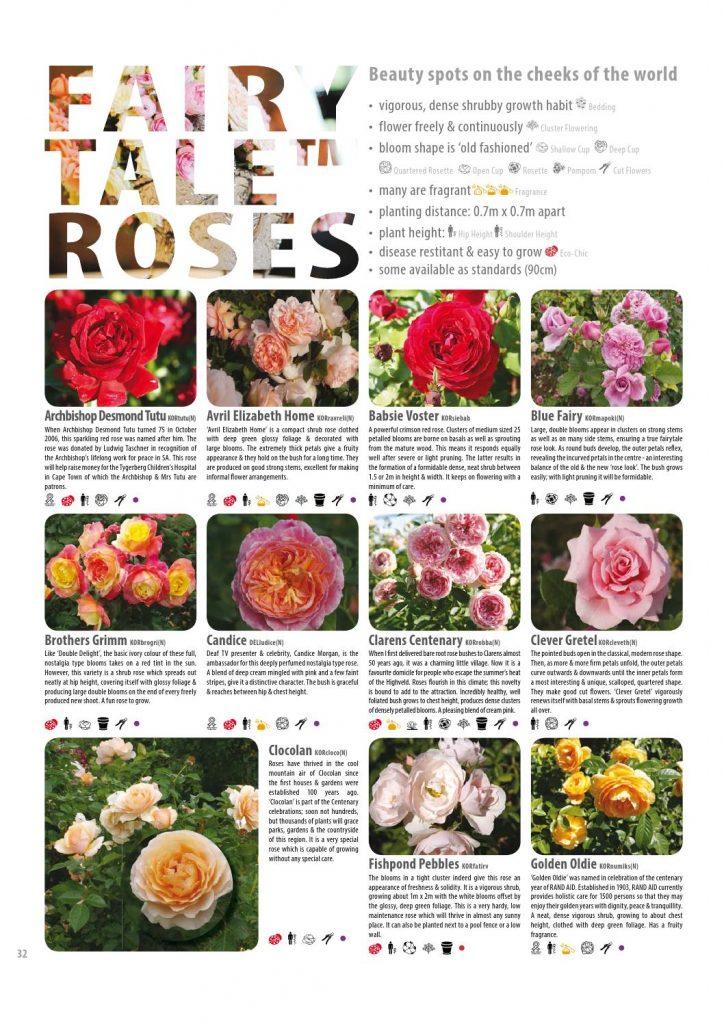 Rose flowering classification