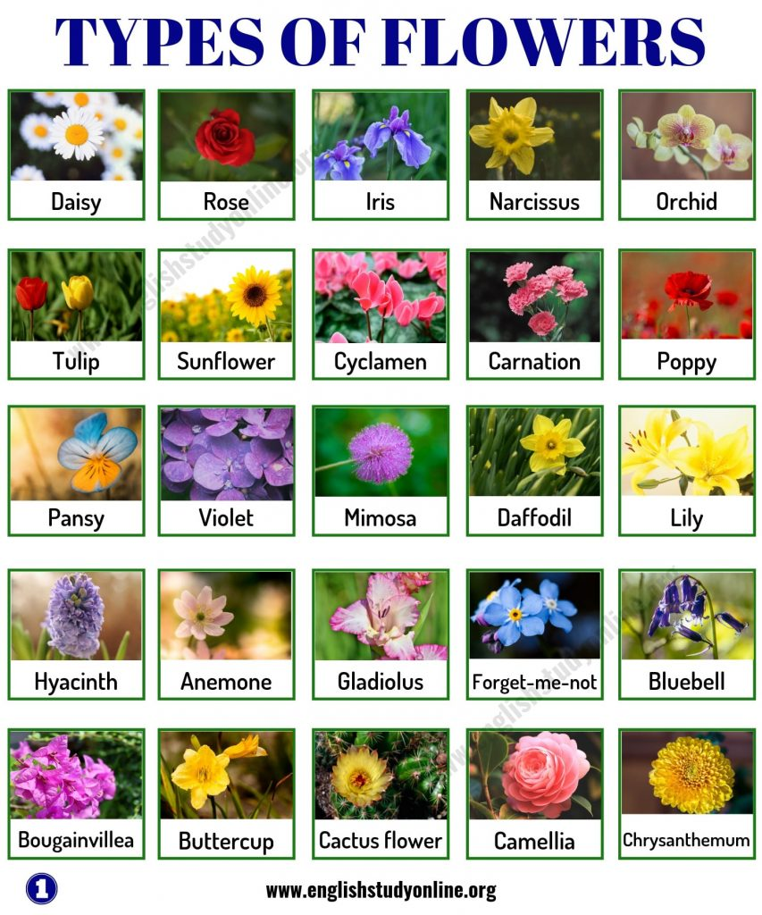 Types – Types of flowers