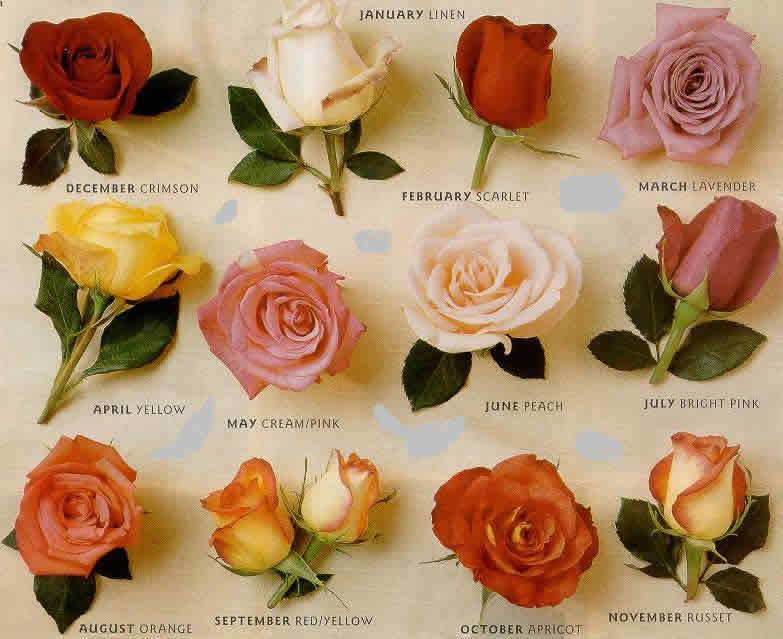 Types of Roses In The World