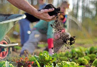 7 Steps to Create Your Own Flower Garden (Planet Natural)