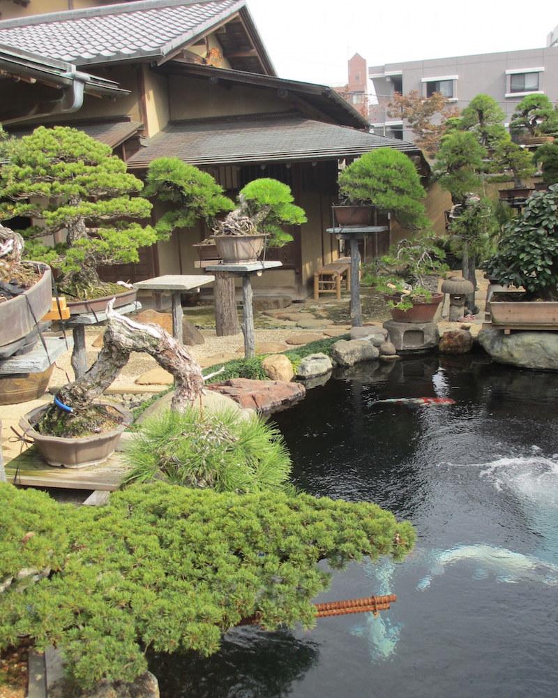 Amazing Bonsai garden design (bonsaiempire.com)