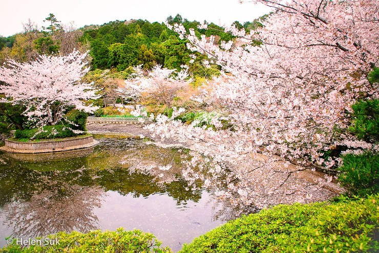 Many people have developed a liking for the Japanese flower garden (Not Without My Passport)