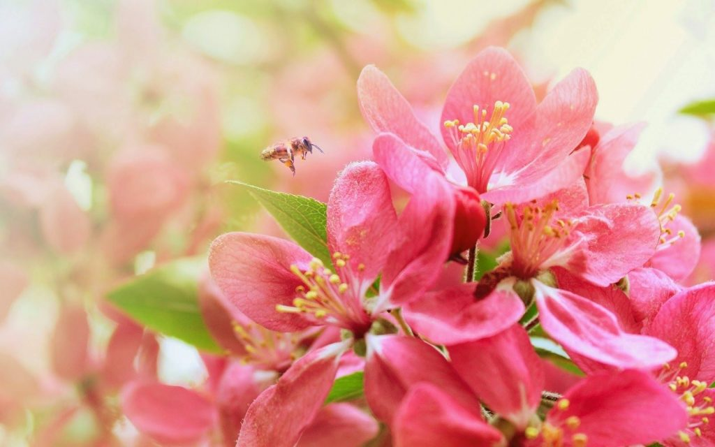 Most Beautiful Flower Wallpapers (Pinterest)