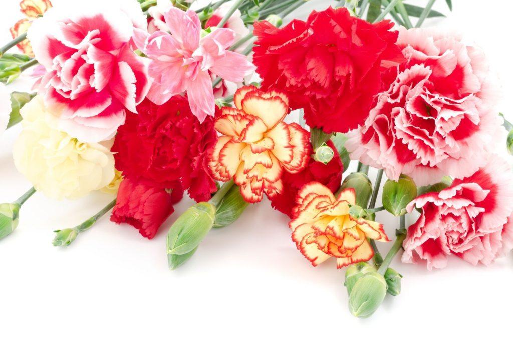 Three Main Types of Carnations (Pinterest.com)