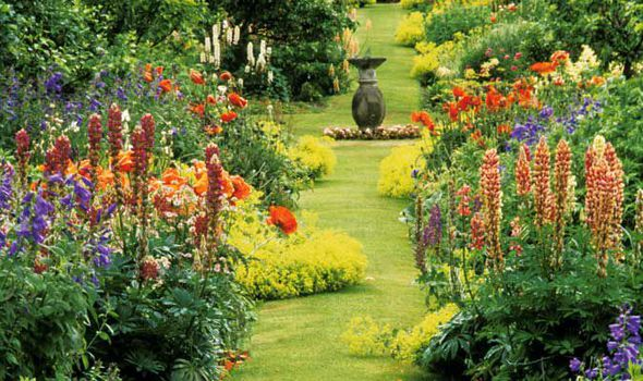 Trees And Shrubs - Flowers And Garden (express.co.uk)
