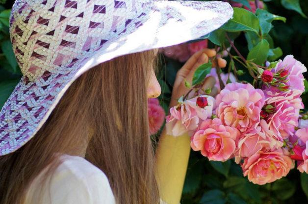 Variety - Garden Rose Flower (Bird and Blooms)