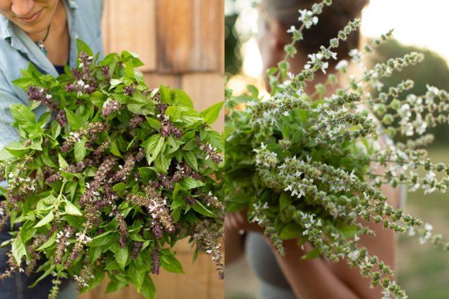 Vase life tricks - Plants with Fragrant Leaves (Floret Flowers)