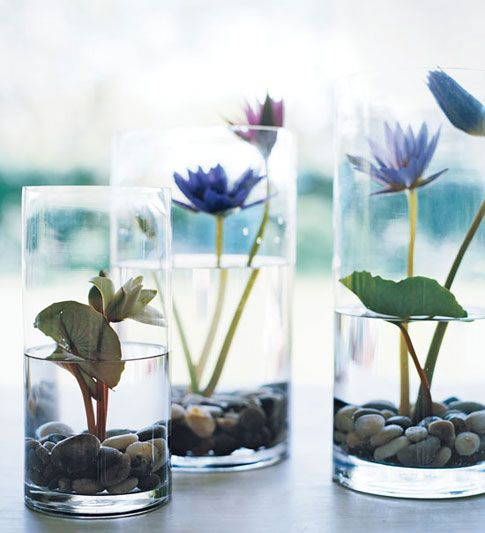 Vase Life Tricks Lilies How to grow water Lilies in Glasses (Pinterst)