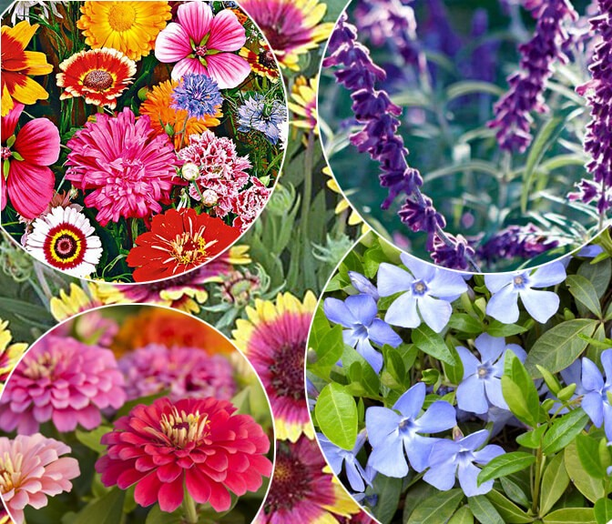 Flowers To Plant In Summer (TLC LAndscapes LLC)